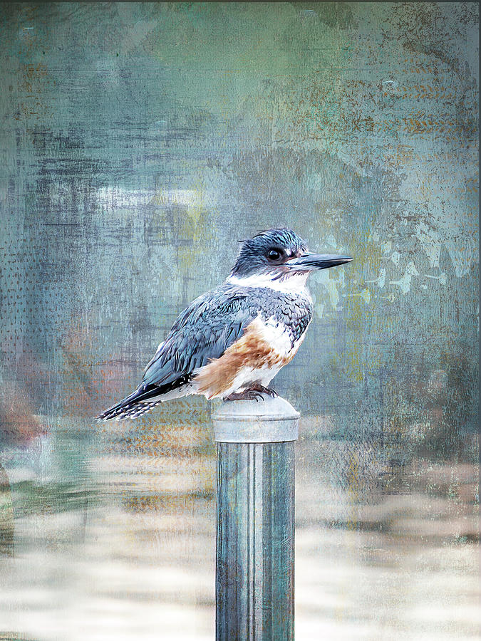 Kingfisher Portrait by Patti Deters