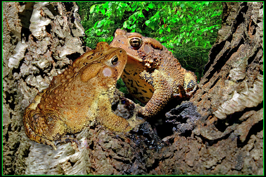 Kiss Of The Toads Digital Art