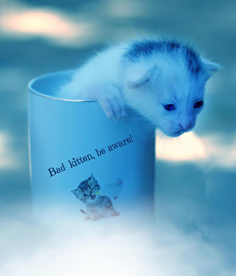 Kitten In A Cup Surreal Digital Art