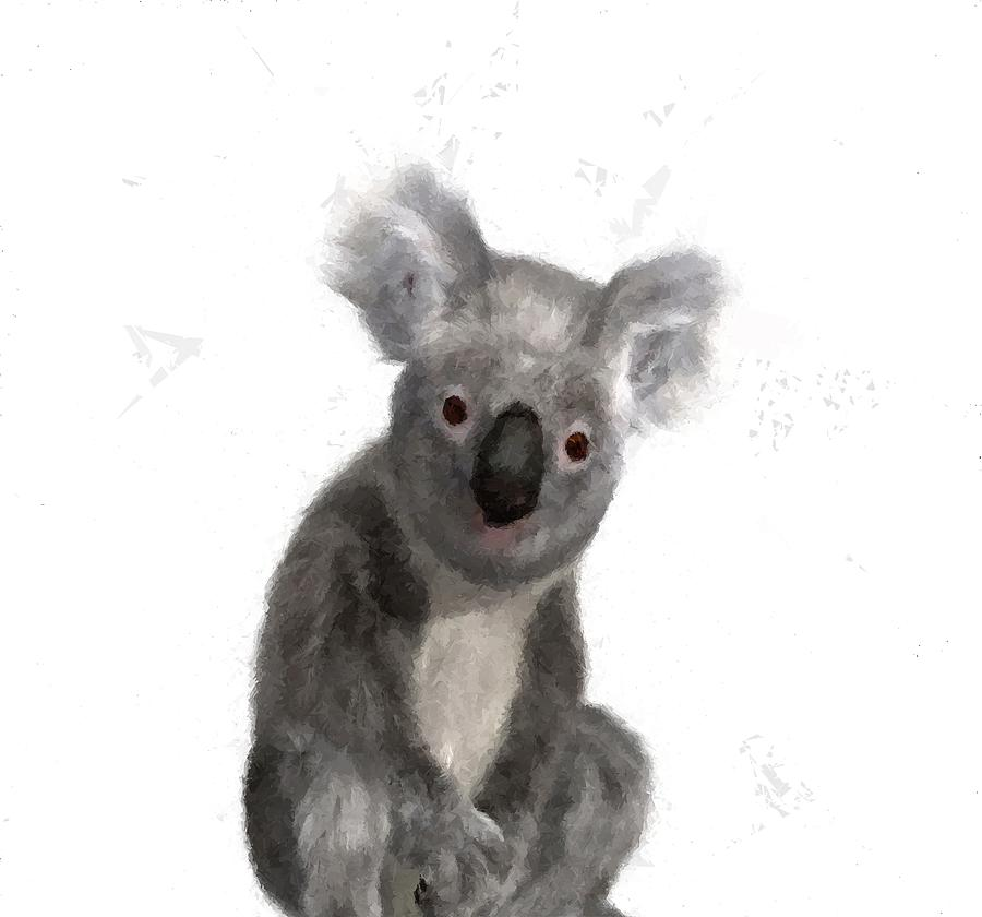 Cute Drawing - Koala Bear Marsupial Animal Childs Room  by David Dehner