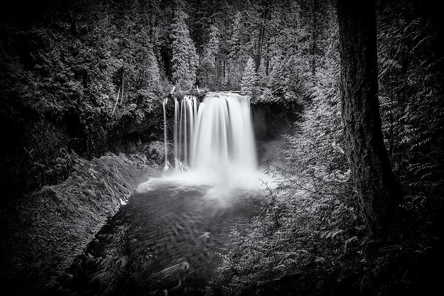 Koosah Falls In Black And White Photograph