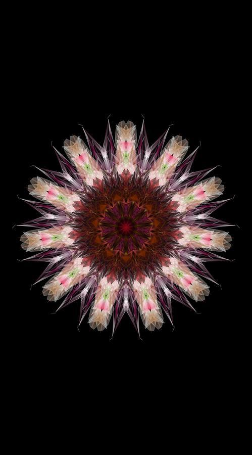 Kosmic Root Chakra Mandala Digital Art