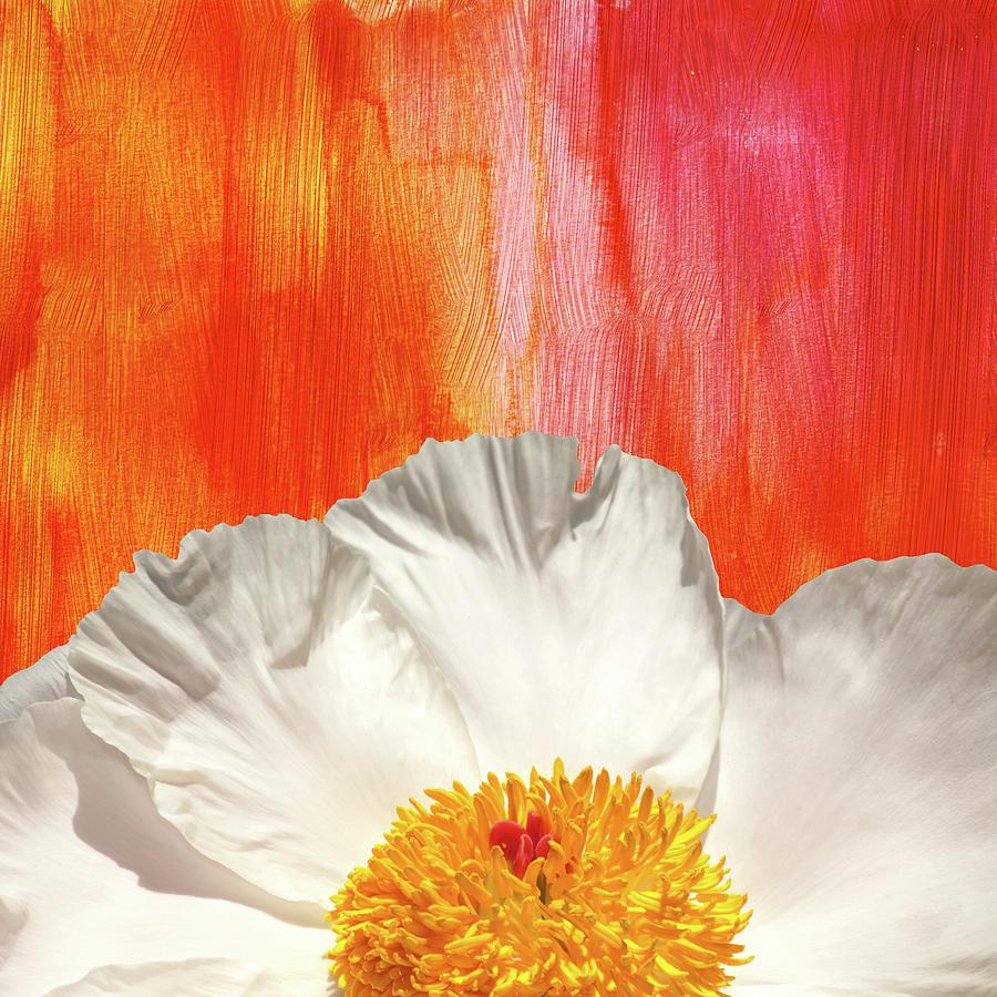 Krinkled White Peony Flower by Trevor Slauenwhite