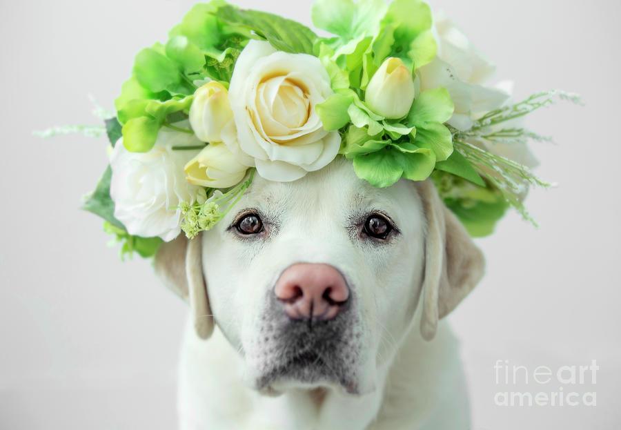 Labrador Retriever with Flower Crown by Diane Diederich
