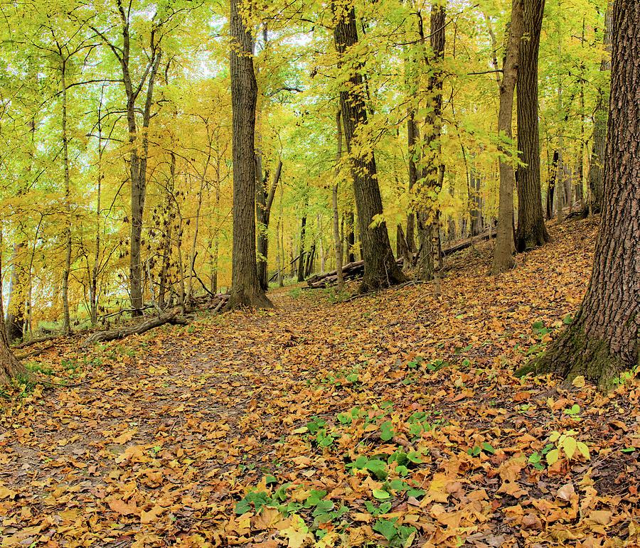 Autumn Photograph - Lacey Keosauqua Autumn by Bonfire Photography