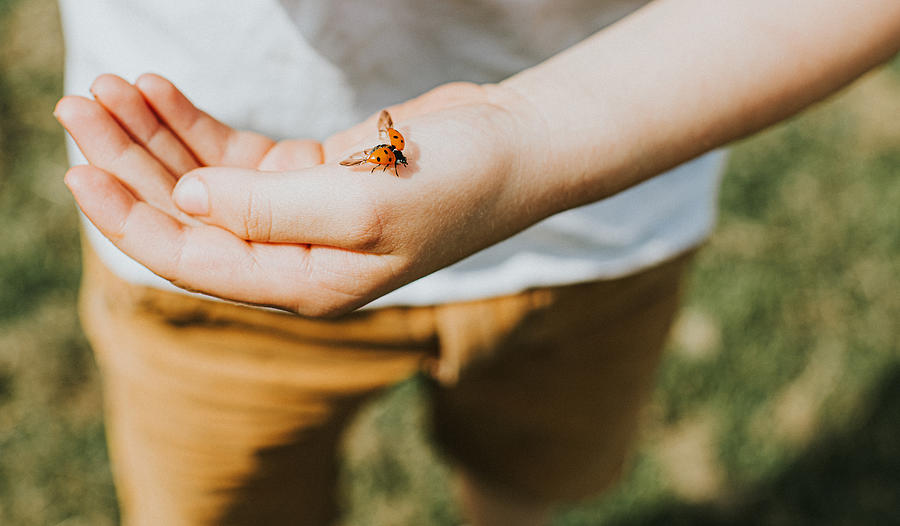 Ladybird landing on a Childs Hand Photograph by Catherine Falls Commercial