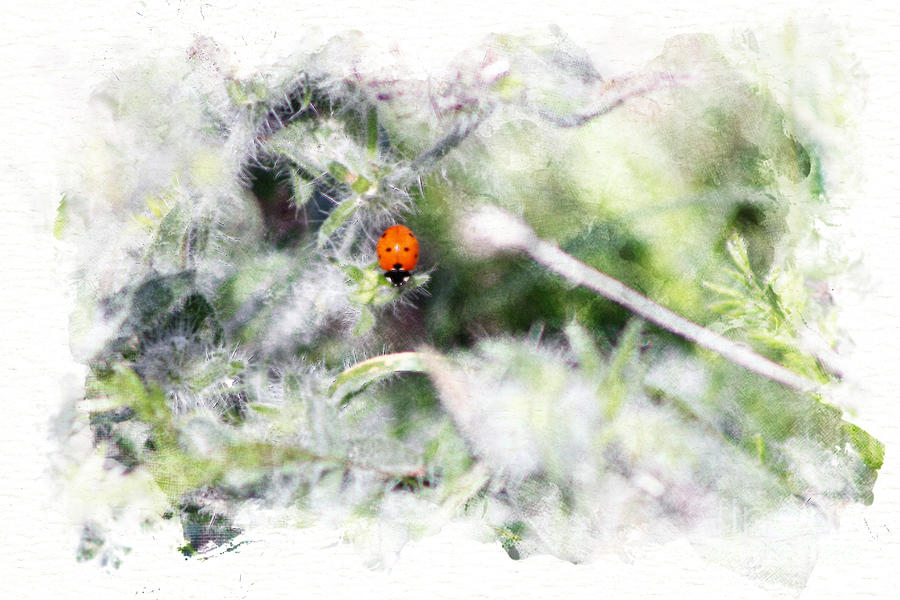 Digital Watercolor Photograph - Ladybug Digital Watercolor Coachella Valley Wildlife Preserve by Colleen Cornelius