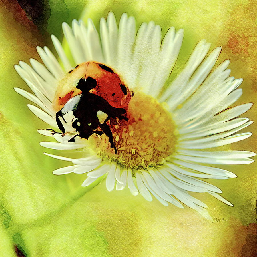 Ladybug Love Painting