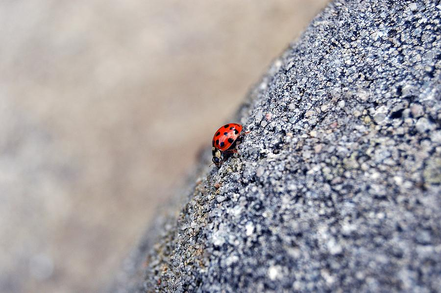 Ladybug by Thomas Schroeder