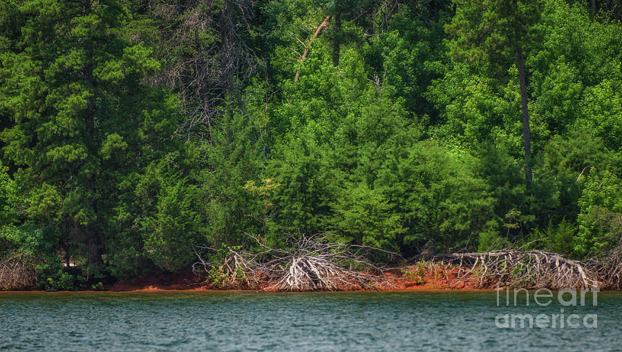 Lake Hartwell - Trees And Red Clay Photograph