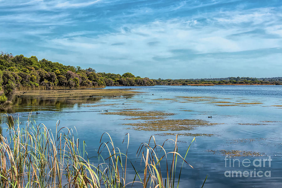 Lake Joondalup, Western Australia by Elaine Teague