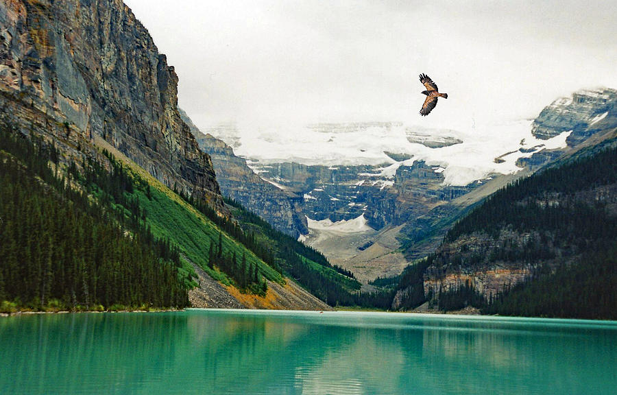Lake Louse Summer With Hawk Flying Over Lake Photograph by Wwing