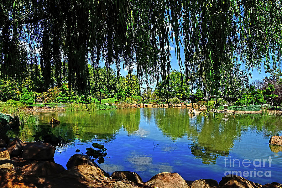 Lake Through The Willow By Kaye Menner Photograph