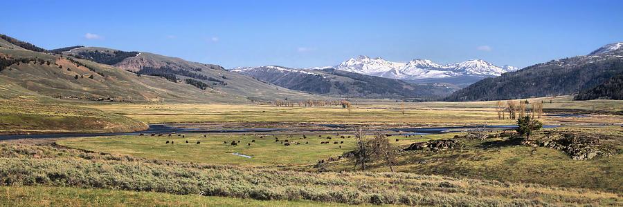 Lamar Valley Photograph