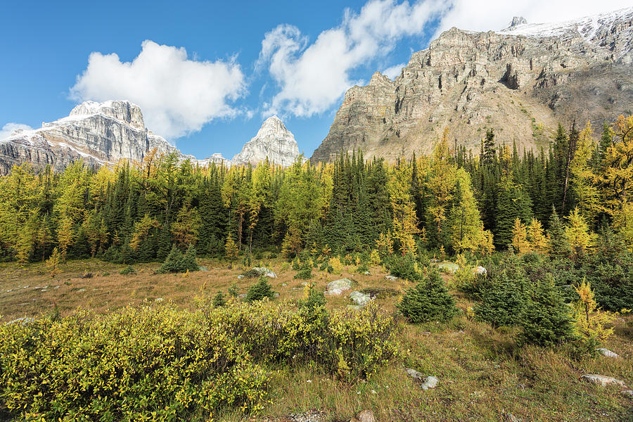 Larch Valley Banff National Park by Jemmy Archer