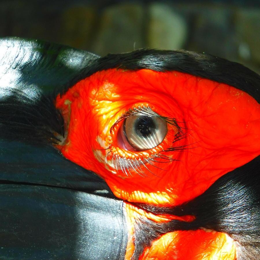 Lash of bird eye. Photograph by YHWHY Vance