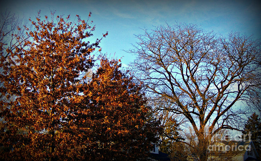 Late Autumn Golden Hour by Frank J Casella