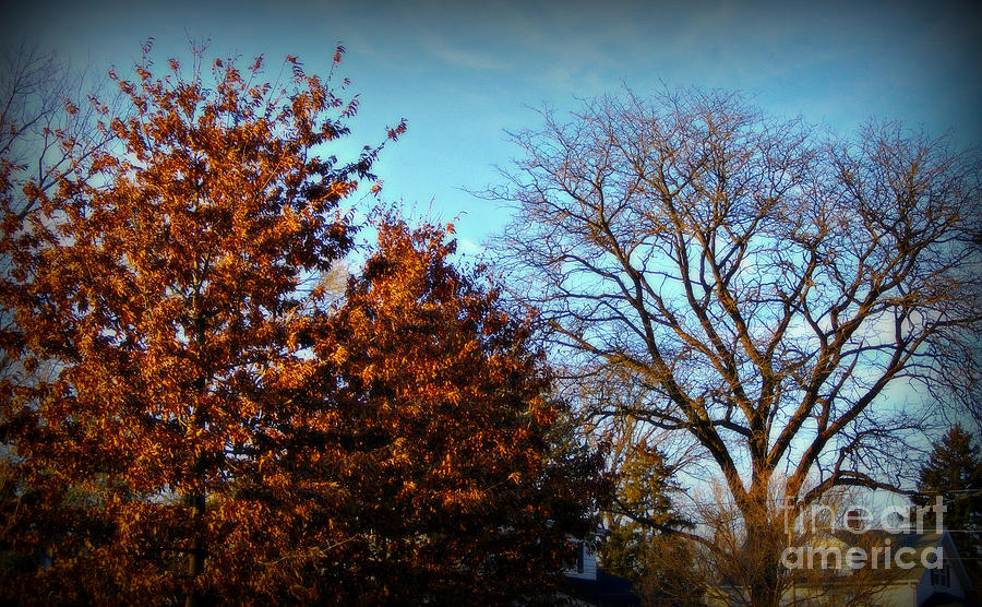 Late Autumn Golden Hour - Soft by Frank J Casella