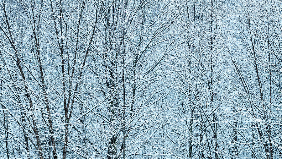 Late Winter Snowy Woods 2 Photograph