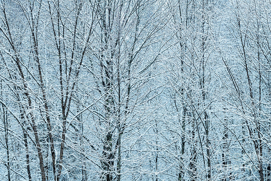 Late Winter Snowy Woods Photograph