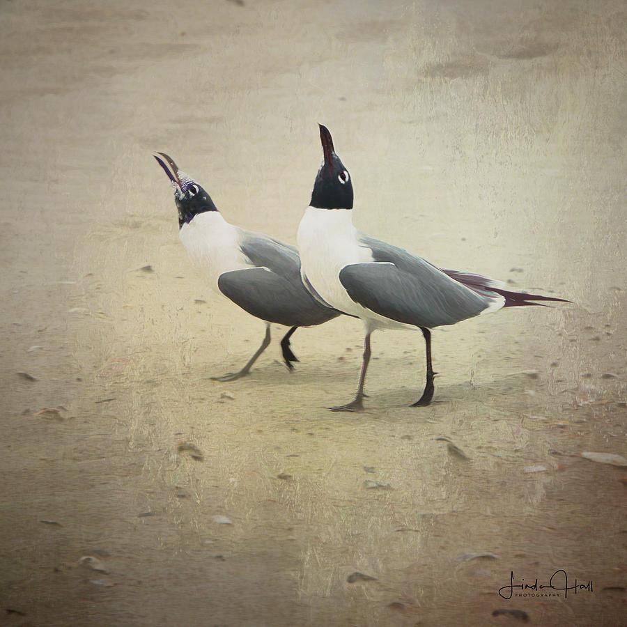 Seagulls Digital Art - Laughing Gulls by Linda Lee Hall