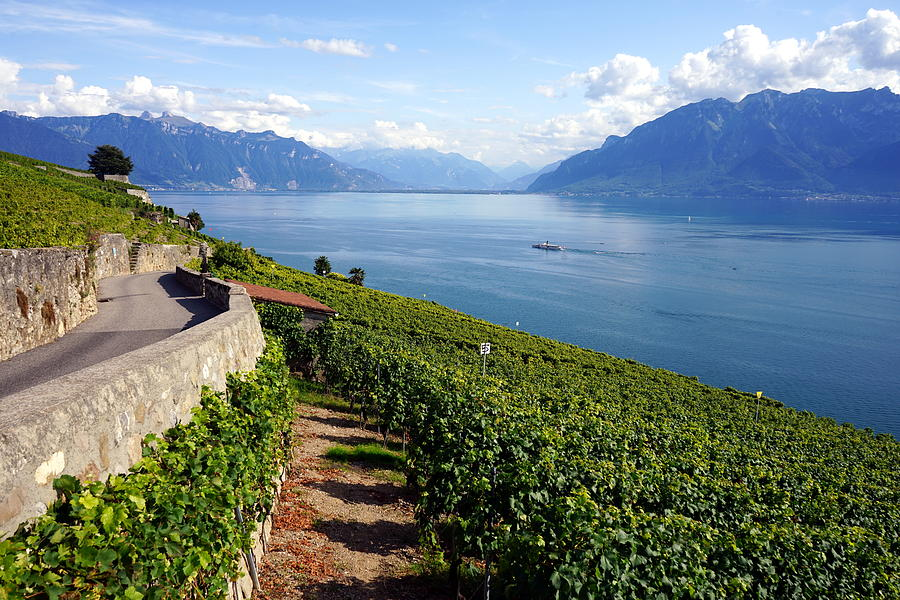 Lavaux Vineyards Photograph - Lavaux Vineyards of Lake Geneva by Two Small Potatoes