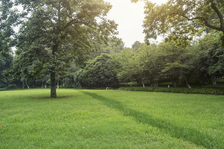 Lawn and trees in the park Photograph by Lingqi Xie