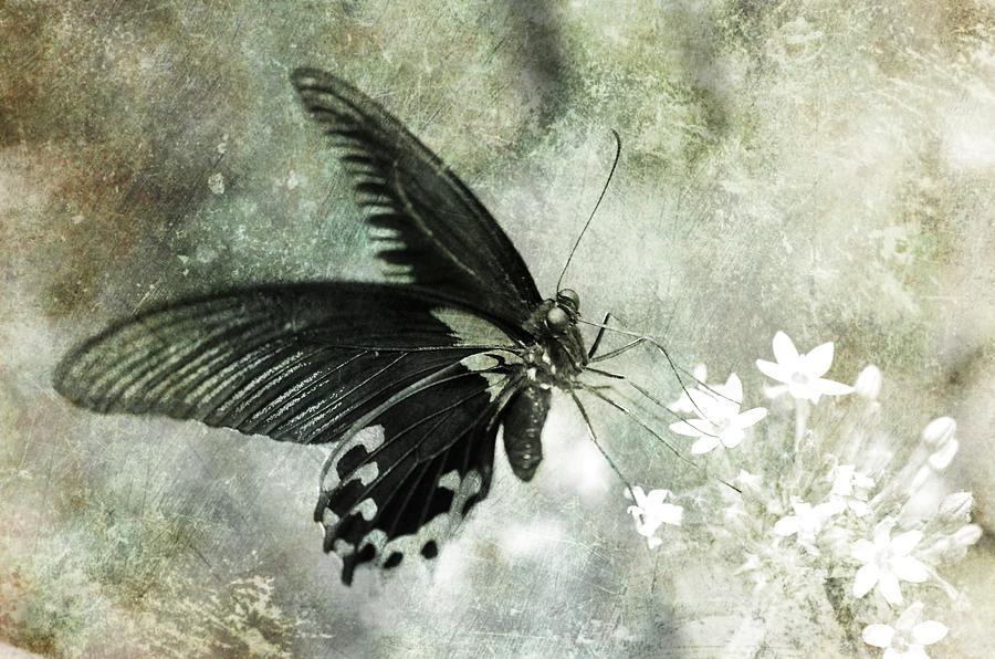 Le Papillon by Marianna Mills
