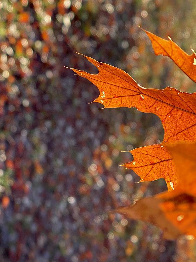 Leaf Detail Photograph