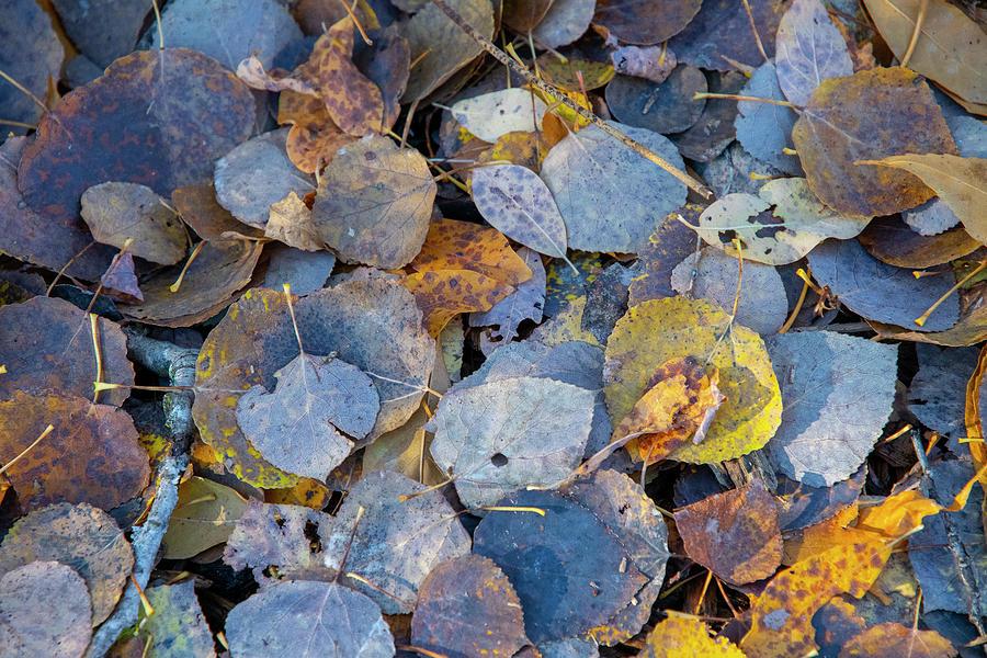 Leaf Fall by Mark Hunter
