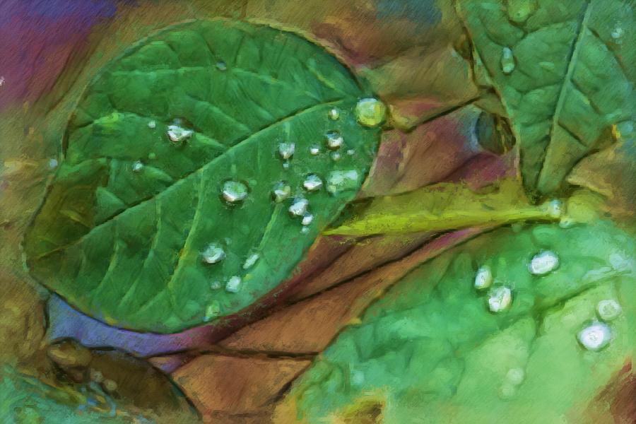 Leaf In The Smokies Digital Art