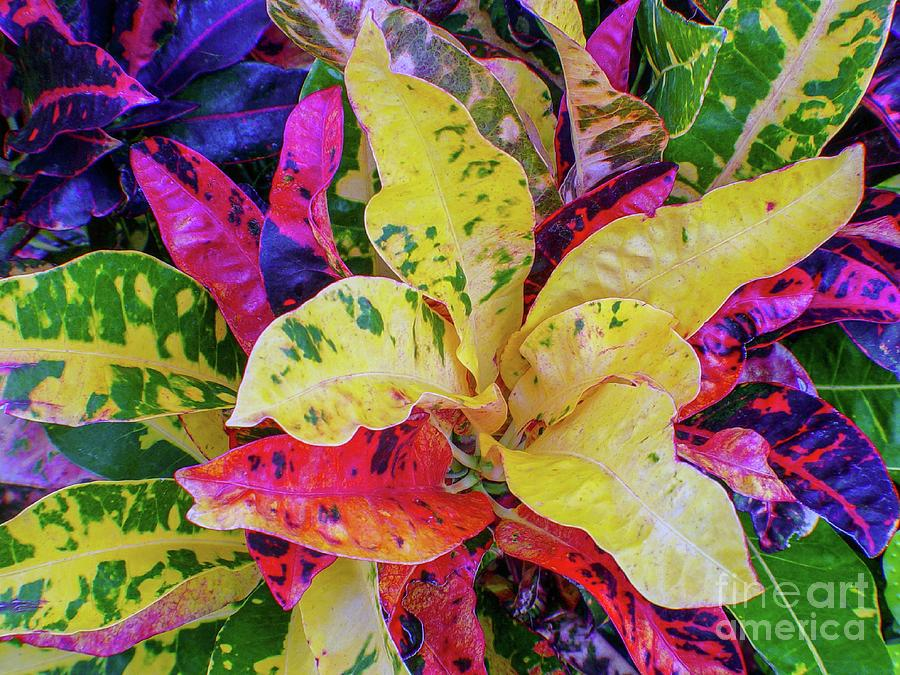 Leaves and Leaves by D Davila