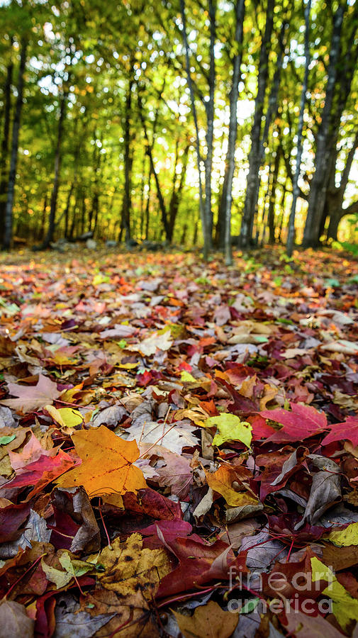 Leaves Are Falling Photograph