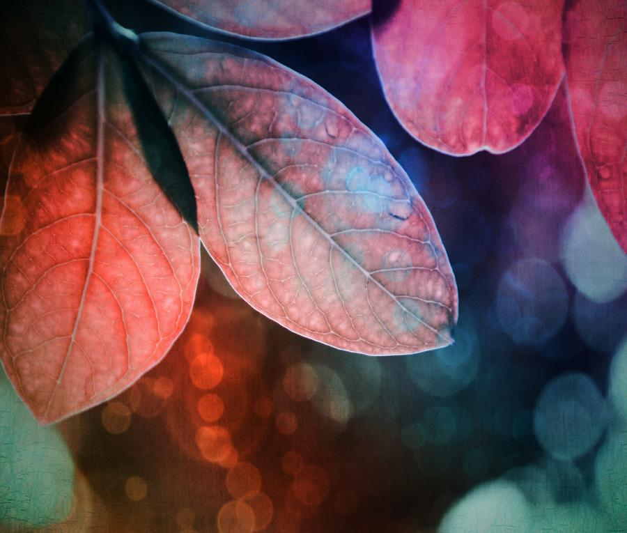 Leaves by Marianna Mills