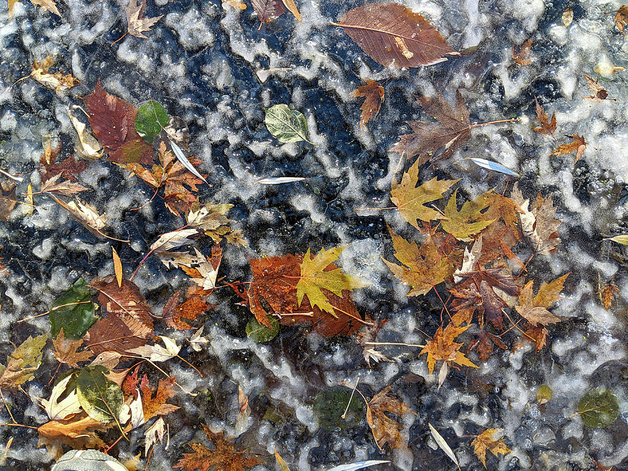 Leaves on Ice by Lynn Hansen