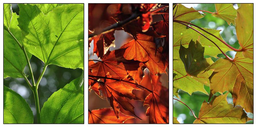 Leaves by Rob Hemphill