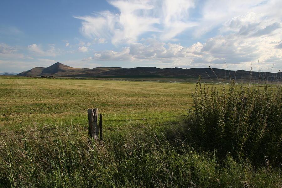 Legacy Grasslands by Dylan Punke