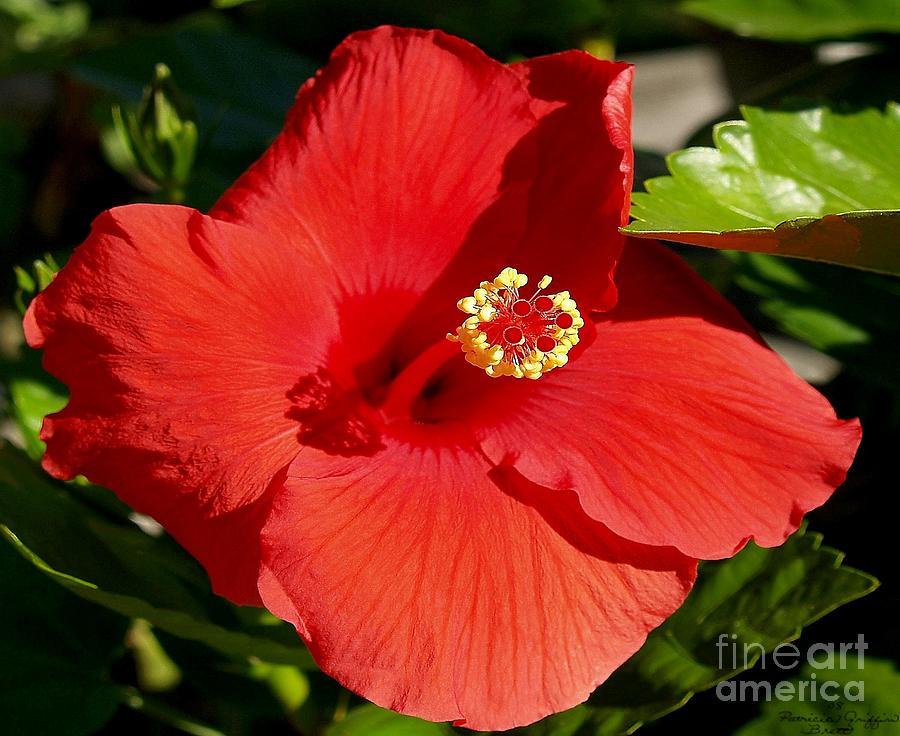 Tropical Plant Photograph - Leila by Patricia Griffin Brett