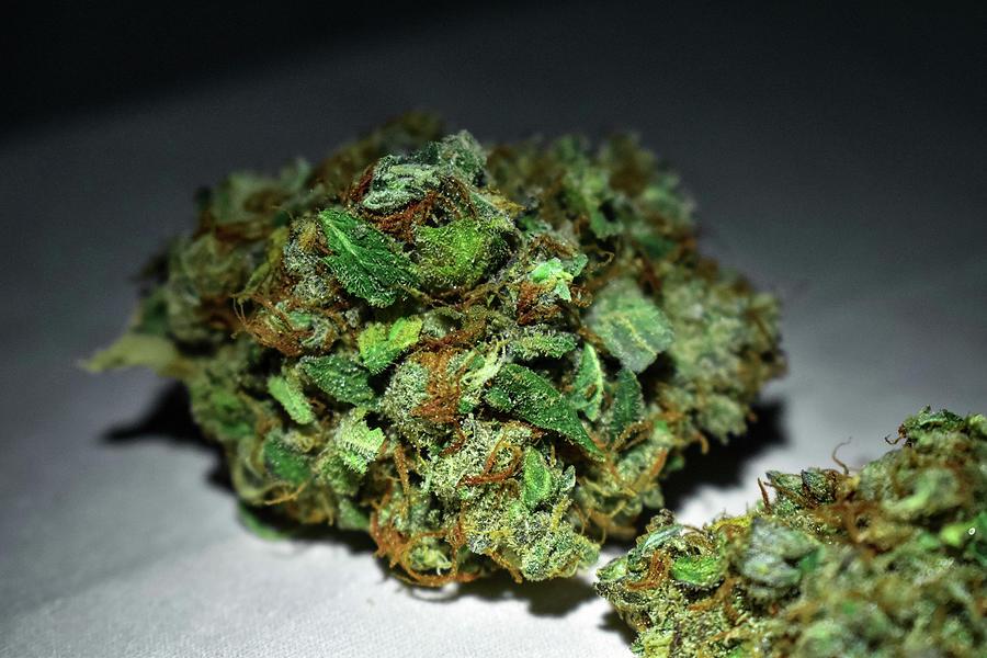 Marijuana Photograph - Lemon Skunk  by Damon Dulewich