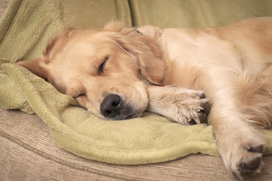 Let sleeping dogs lie Photograph by Image copyright of S Turner