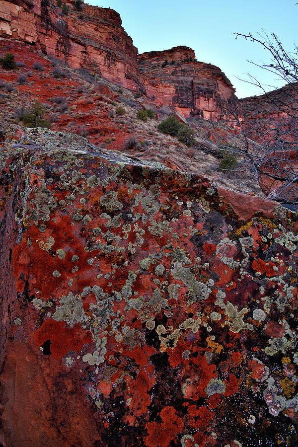 Lichen Gallery Along Colorado River Photograph