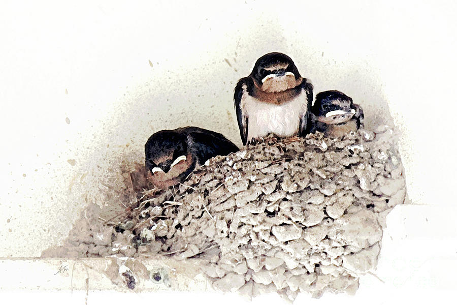 Life Is Messy - Swallows Painting