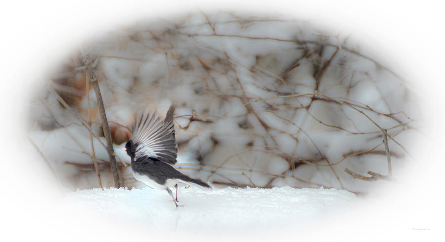 Lift Off by Diane Lindon Coy