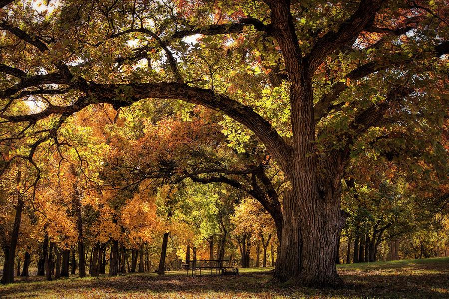 Lifting Up Autumn by Scott Bean