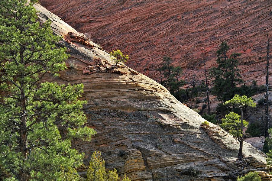 Light Along The Ridge Zion National Park Photograph