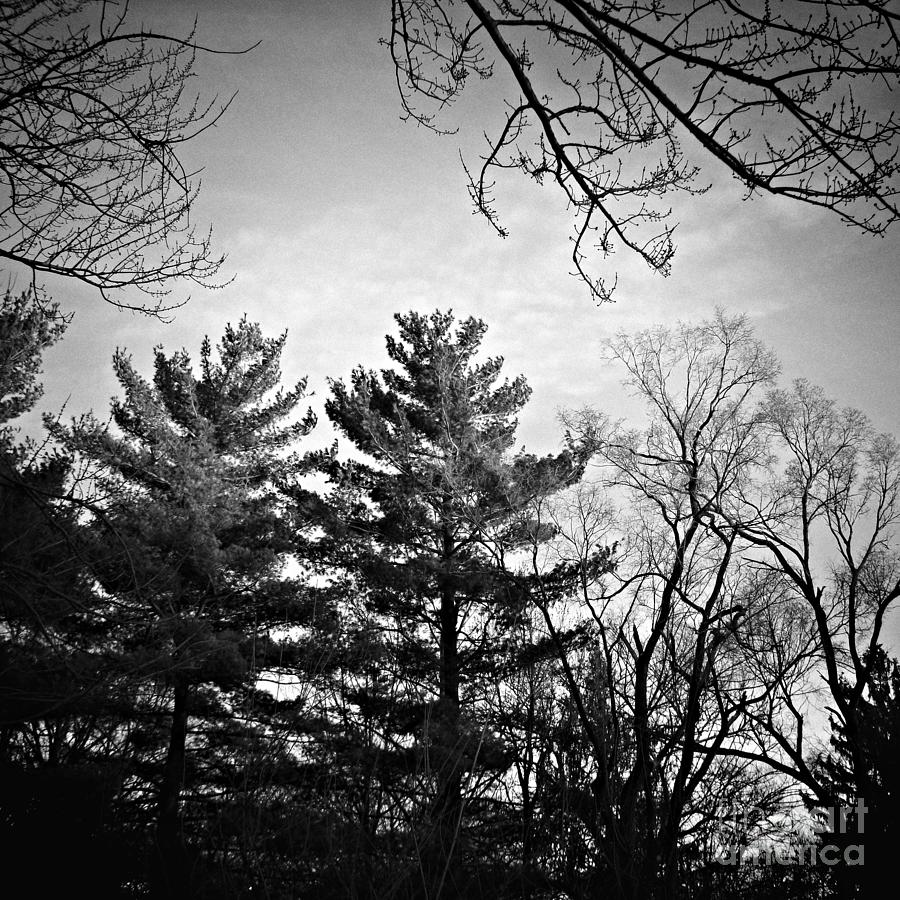 Landscape Photograph - Light of Holiness - Black and White by Frank J Casella