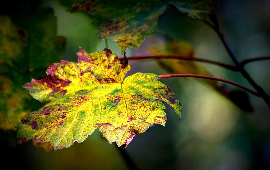 Light on autumn by Jolly Van der Velden