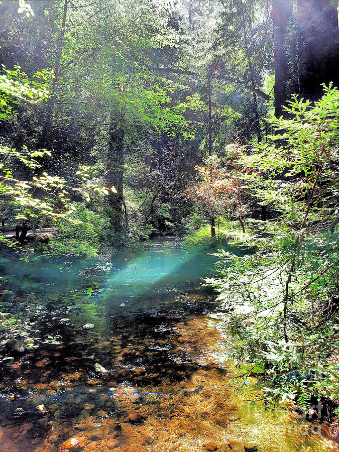 Light On The Creek In The Woods Photograph