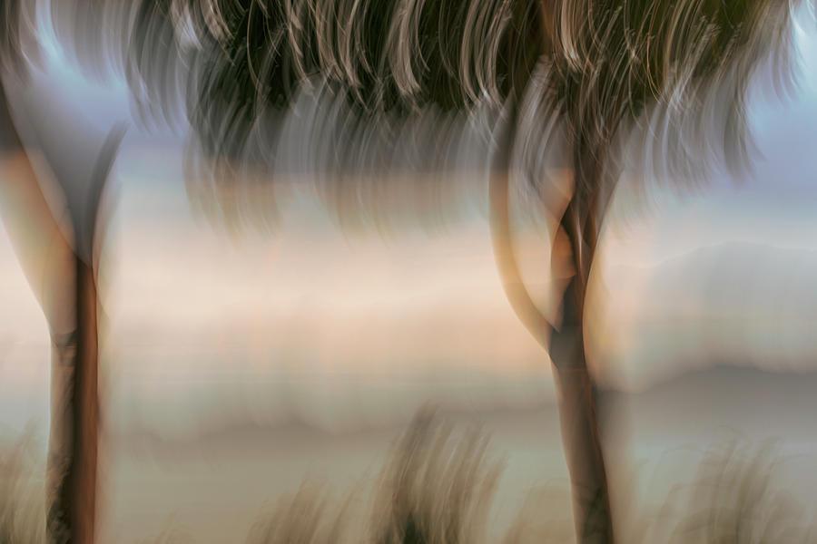 Light On The Horizon Photograph
