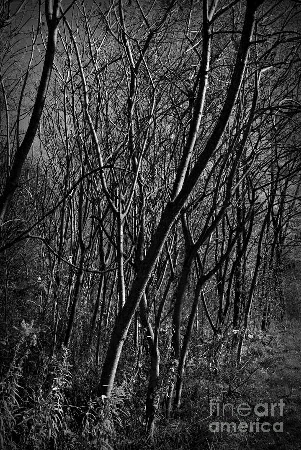 Nature Photograph - Light Through Trees - Monochrome by Frank J Casella